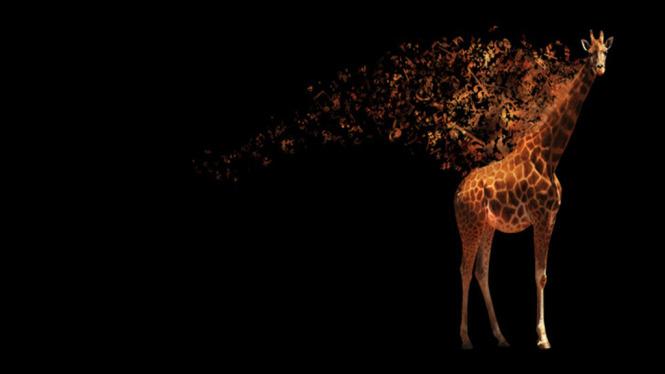 Жираф испугался  № 3895577 загрузить